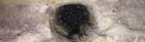 Kig ind i hulmuren med Neopixels perler